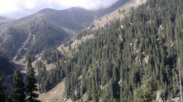 Deputy minister agriculture visits Kunar to investigate reports of timber smuggling